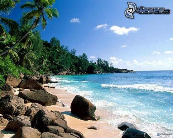 plaża, morze, krajobraz, kamienie, palmy, fale na wybrzeżu, niebo