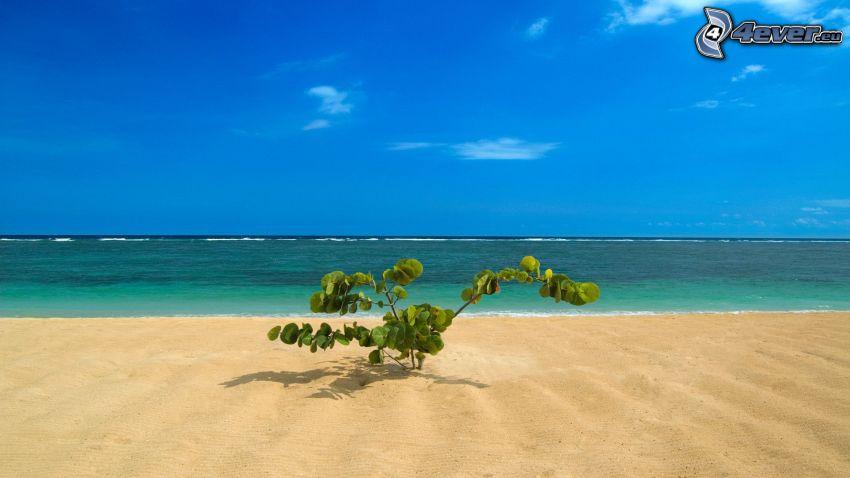 plaża, morze, krzak