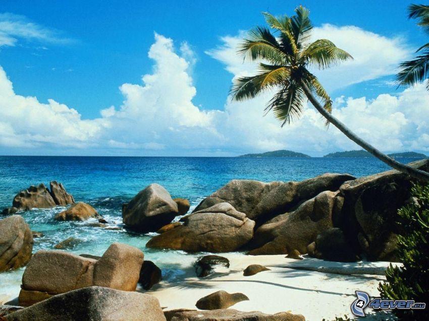 plaża, palma, niebo, morze, romantyka, piasek