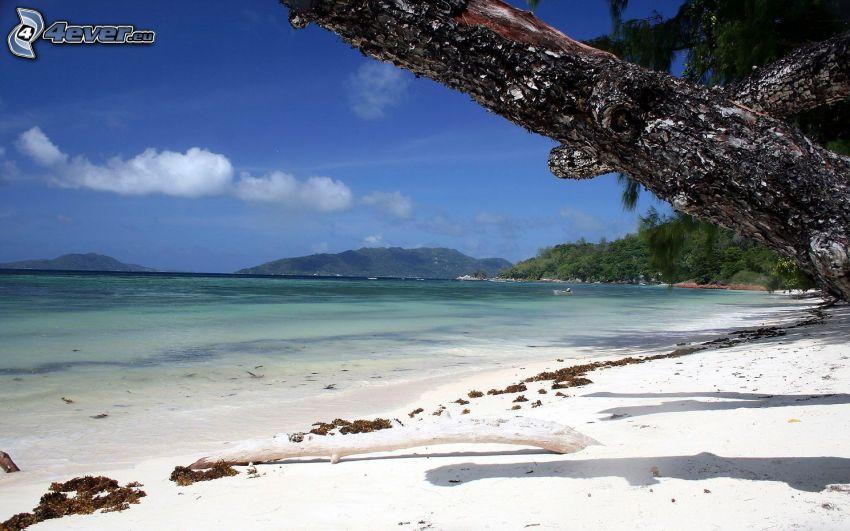 plaża piaszczysta, pasmo górskie, drzewa