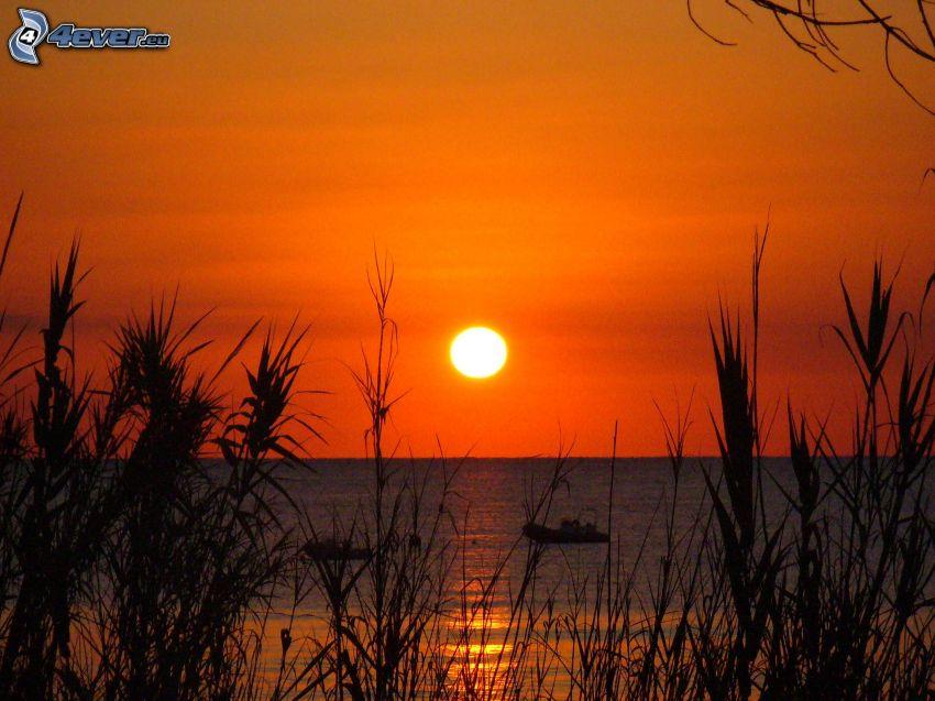 pomarańczowy zachód słońca nad morzem, źdźbła trawy o zachodzie słońca