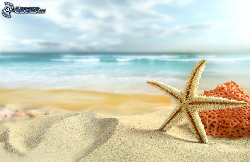 rozgwiazda, plaża, morze
