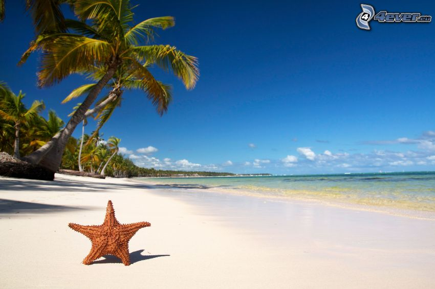 rozgwiazda, plaża, palmy