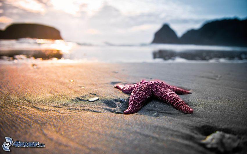 rozgwiazda na plaży, morze