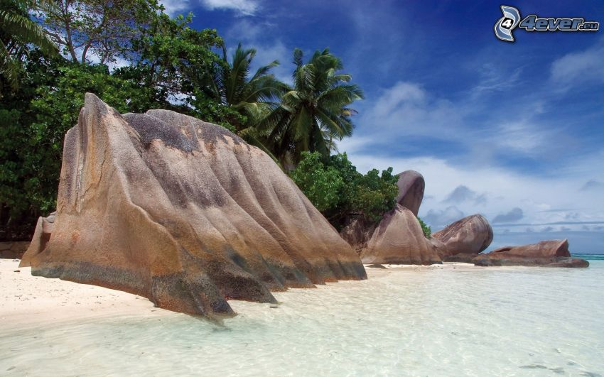 skała na plaży, plaża piaszczysta, palmy