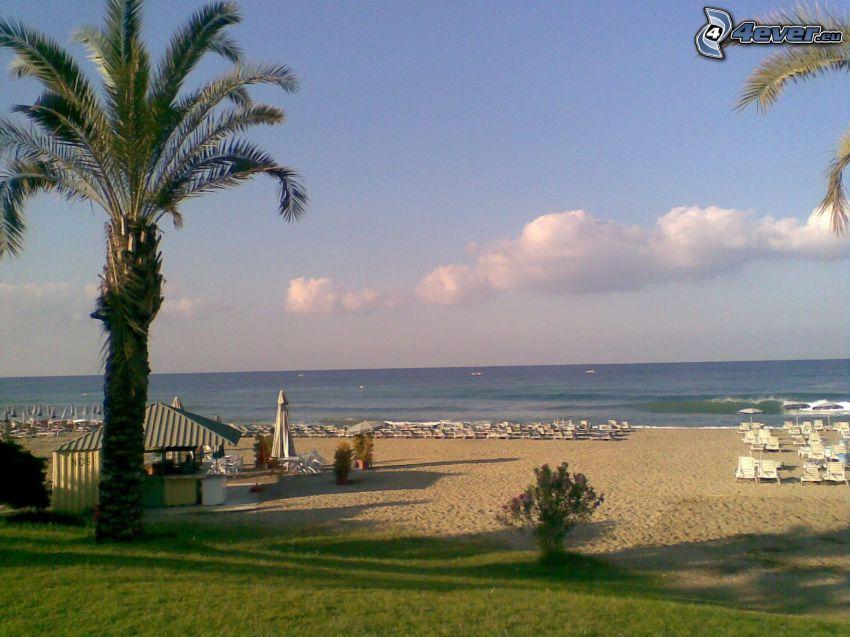Turcja, palma, plaża