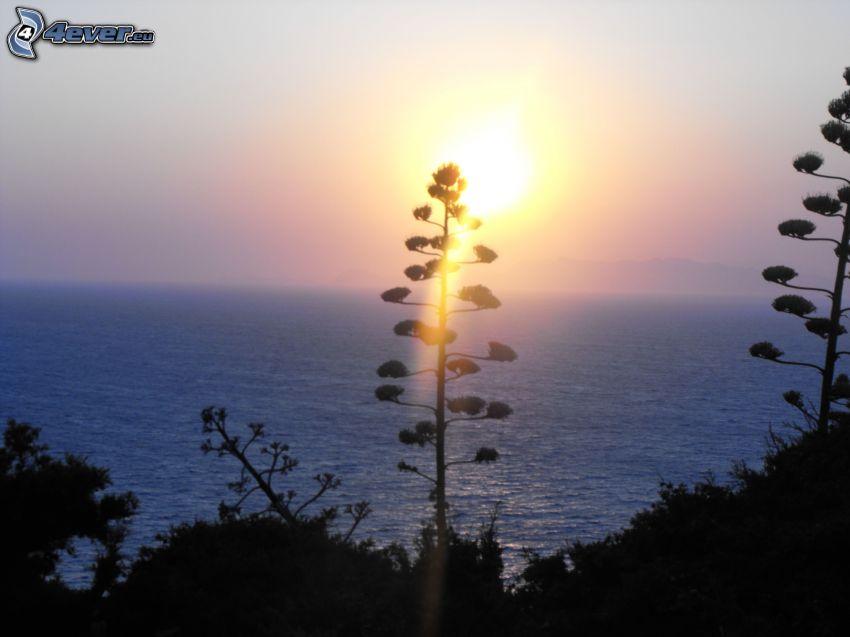wschód słońca, Morze Śródziemne, sylwetki drzew, widok na morze