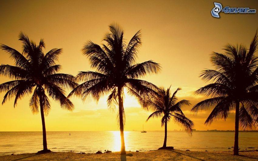 wschód słońca na powierzchni morza, palmy nad morzem, sylwetki