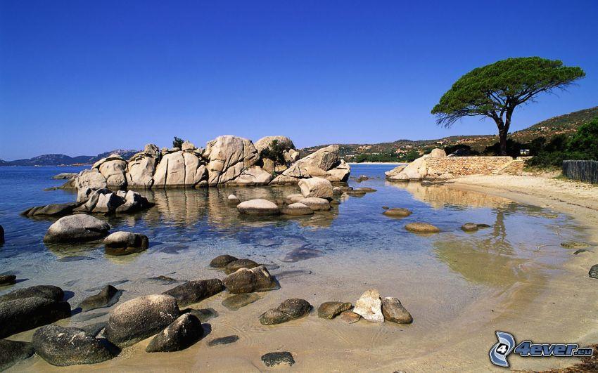 wybrzeże, skały, drzewo, morze