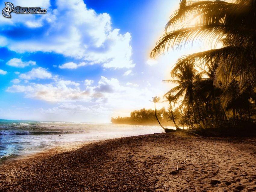 wybrzeże o zachodzie słońca, kamienista plaża, palmy nad morzem