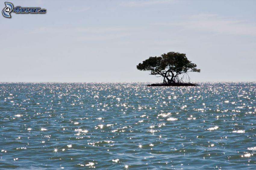 wysepka, samotne drzewo, morze, odbicie słońca