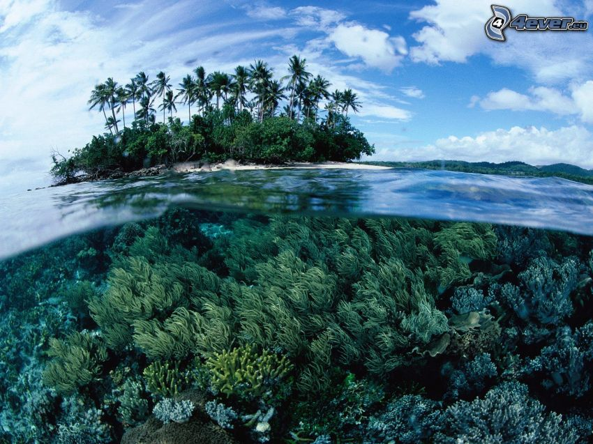 wyspa z palmami, woda, koralowce