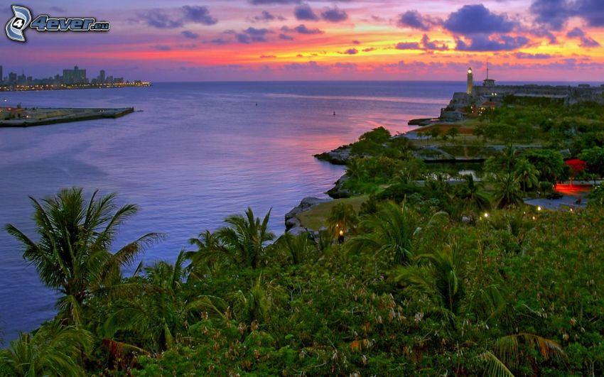 zachód słońca nad morzem, palmy, miasto wieczorem
