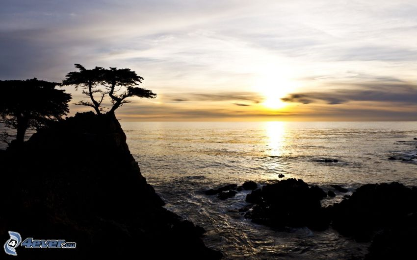 zachód słońca nad morzem, sylwetka drzewa