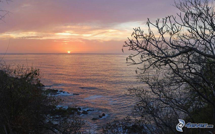 zachód słońca nad morzem, sylwetki drzew