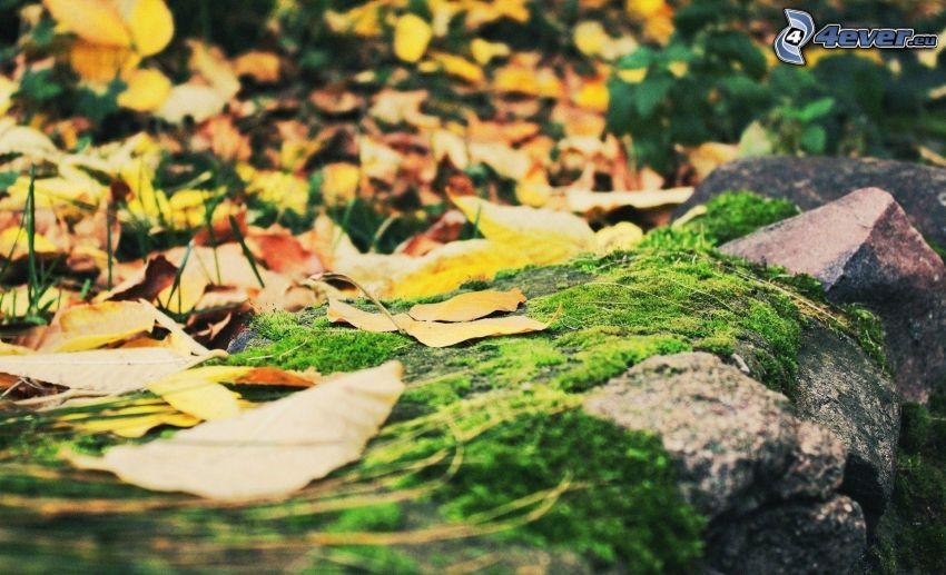 mur z kamienia, żółte liście
