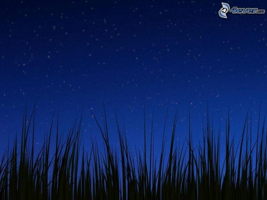 niebo w nocy, trawa