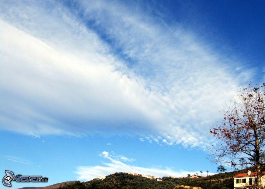 chmury, drzewo