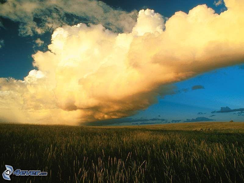 pole, chmura, niebo