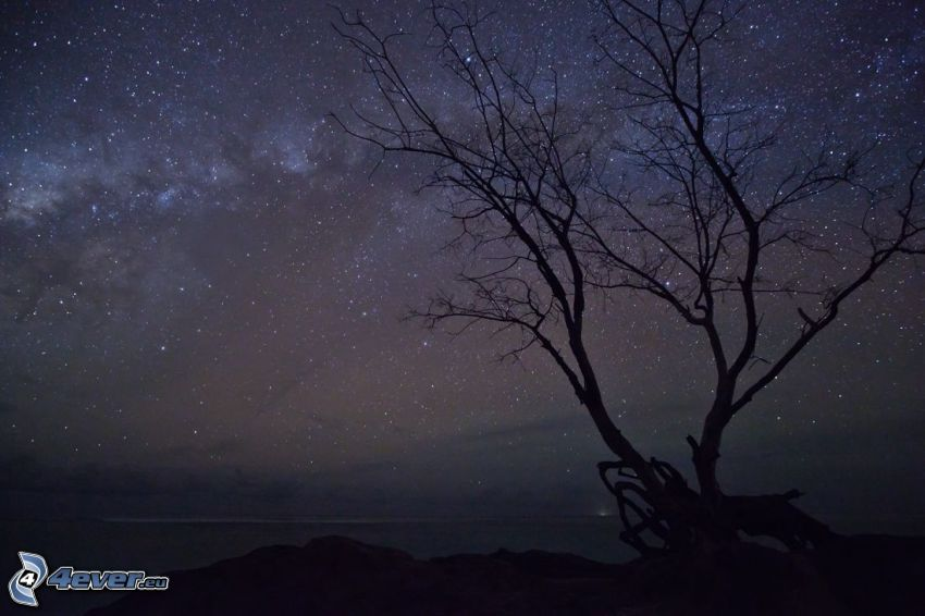 samotne drzewo, gwiaździste niebo, noc