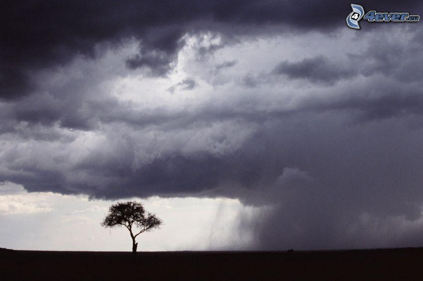 samotne drzewo, sylwetka drzewa, chmury, deszcz