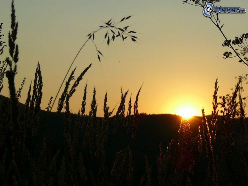 zachód słońca nad polem, łąka, trawa, Słowacja