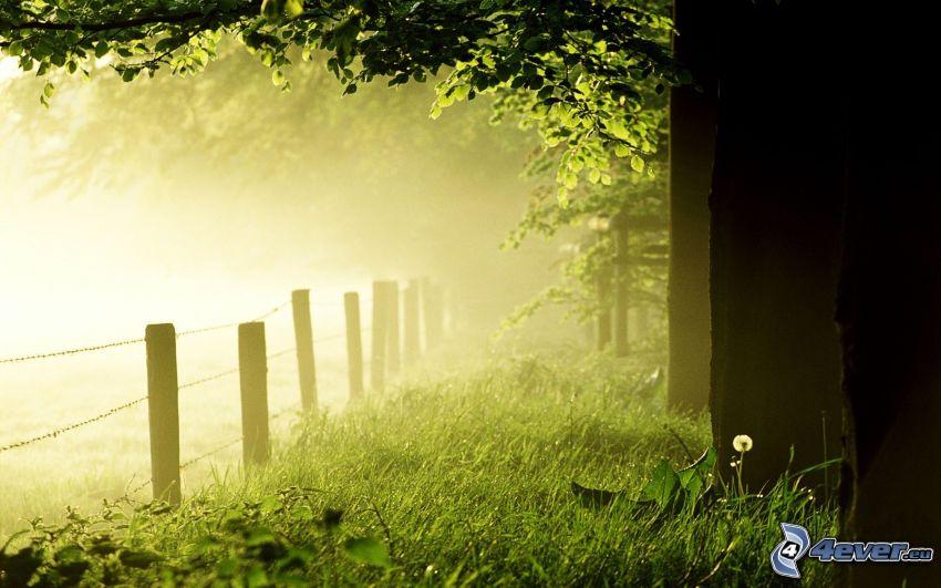 ogrodzenie z drutu, drzewa, przyziemna mgła