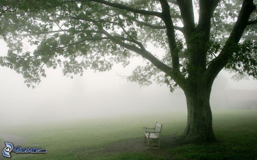 ogromne drzewo, ławeczka, mgła
