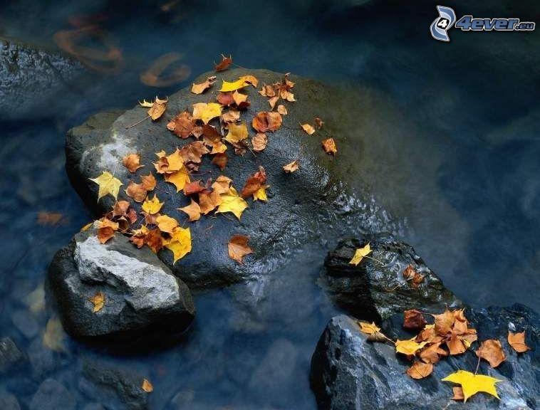 opadnięte liście, kamienie, woda