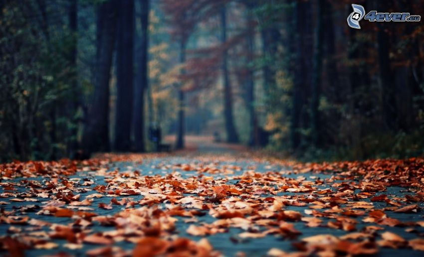 opadnięte liście, las