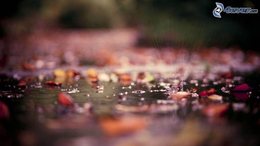 opadnięte liście, woda