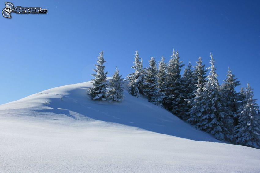 ośnieżone drzewa, zaśnieżona łąka