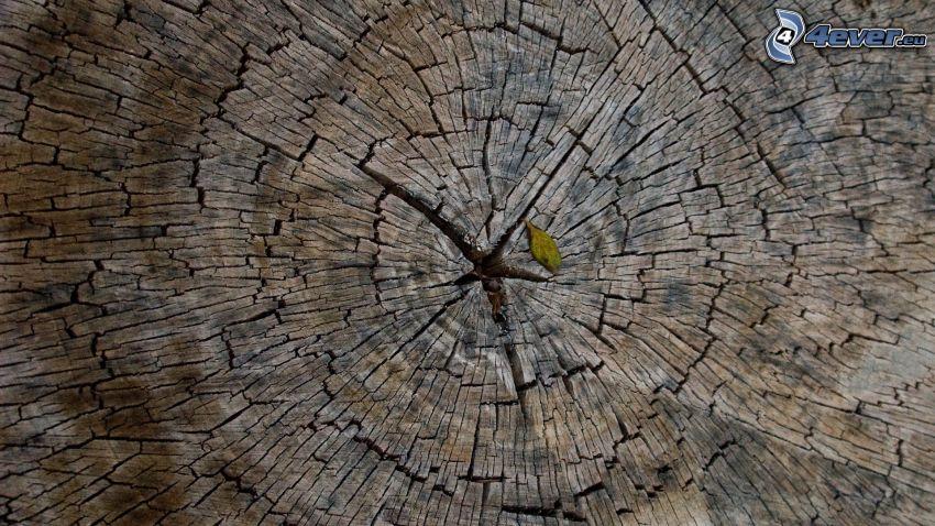 pień, drewno, pęknięcia