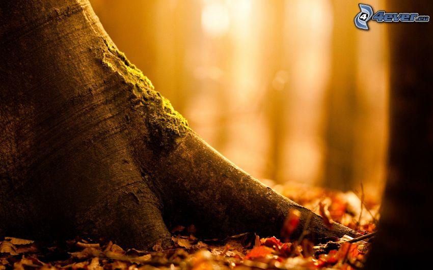 plemię, opadnięte liście