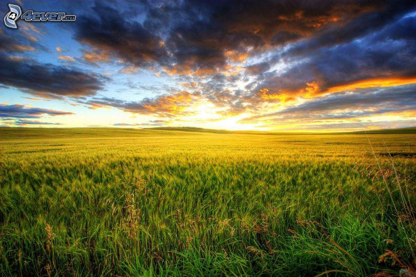 po zachodzie słońca, łąka, ciemne chmury