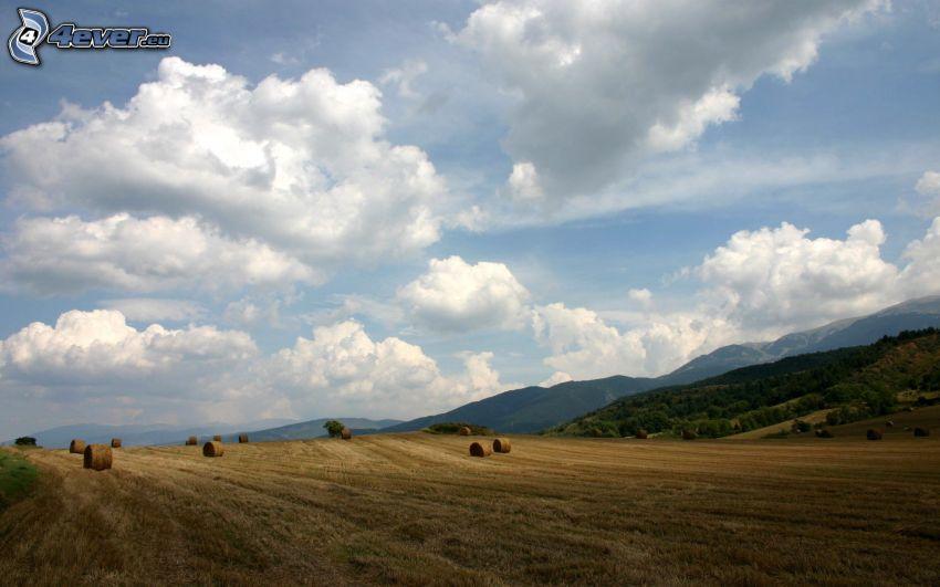 pola, zlisowana słoma, chmury