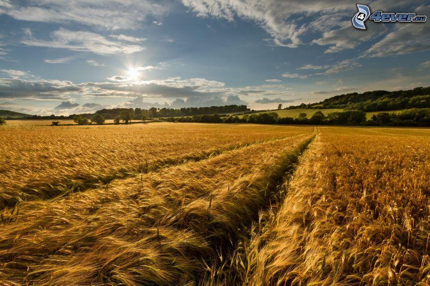 pole, niebo, słońce, lasy i łąki