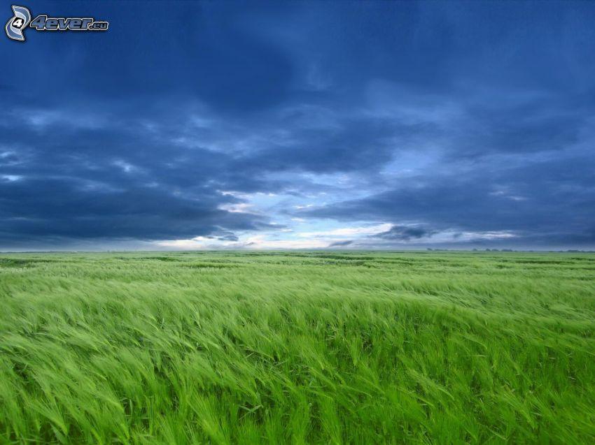 pole, niebo
