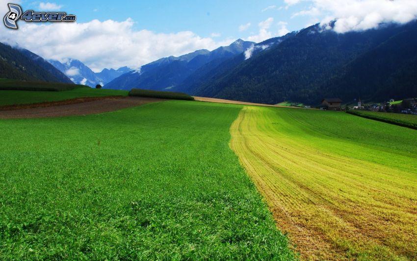 pole, wzgórza