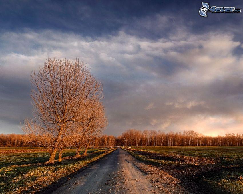 polna droga, aleja drzew, drzewa, łąki, chmury
