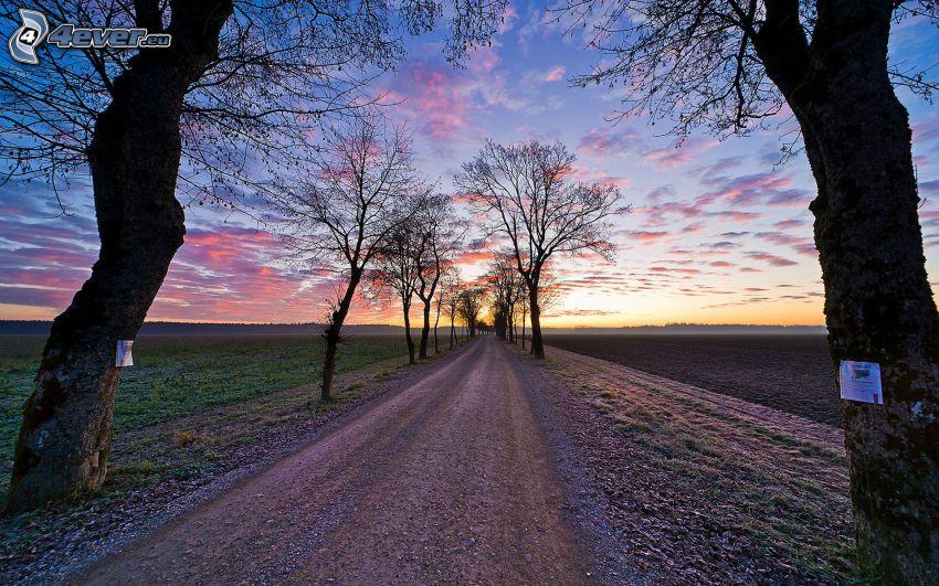polna droga, aleja drzew, niebo, pole