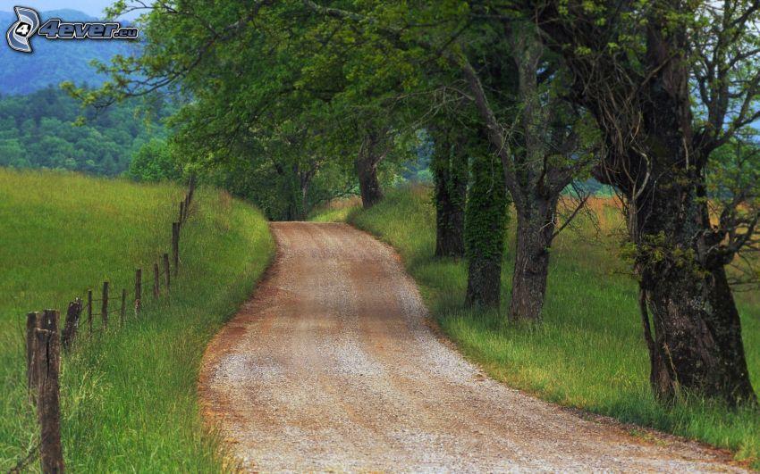 polna droga, aleja drzew, płot, trawa