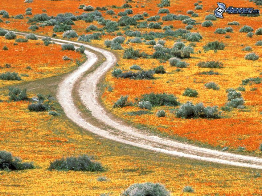 polna droga, Antelope Valley