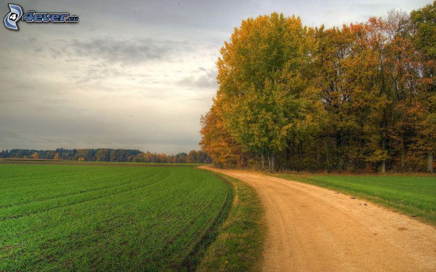 polna droga, drzewa, pole