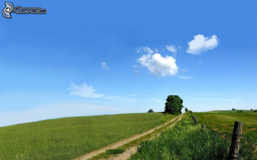 polna droga, drzewo, niebo, chmury