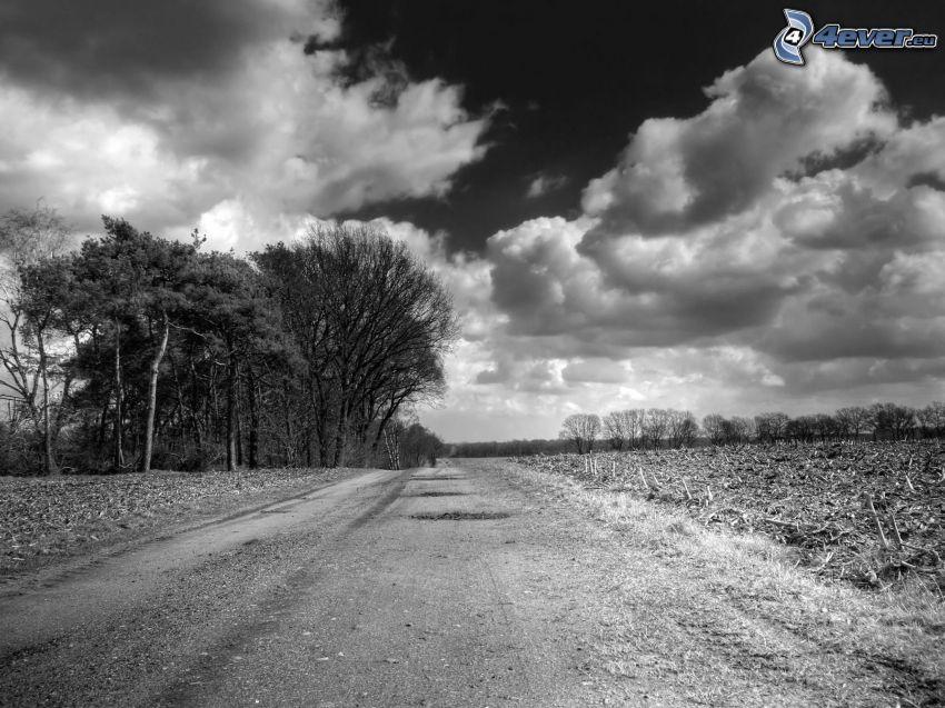 polna droga, las, chmury, czarno-białe zdjęcie