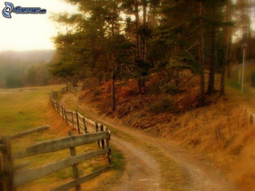polna droga, las, drewniany płot, łąka
