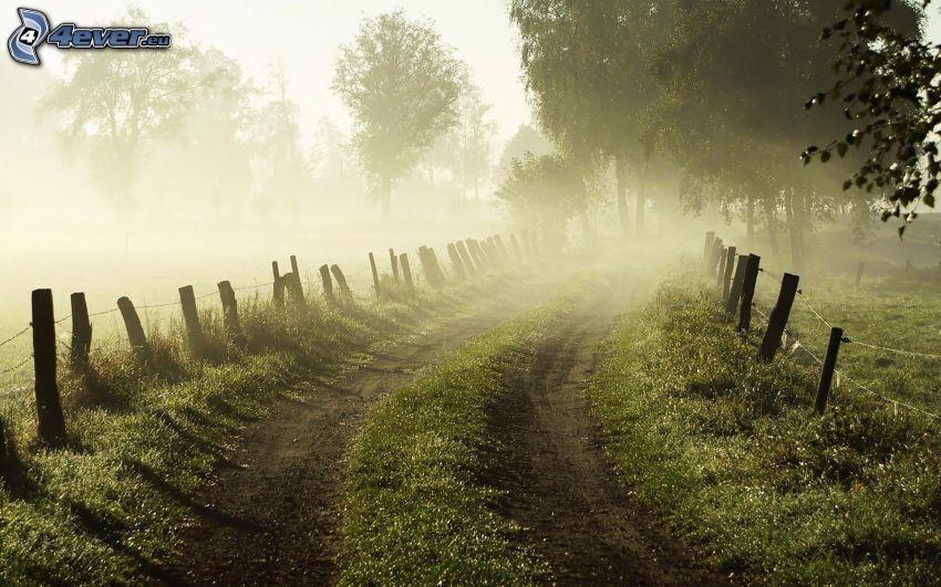 polna droga, płot, drzewa, przyziemna mgła