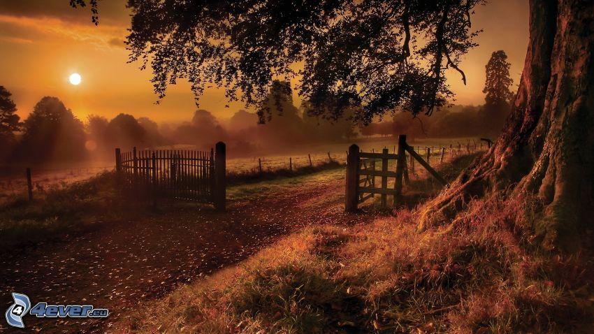 polna droga, płot, słońce, las, pomarańczowe niebo