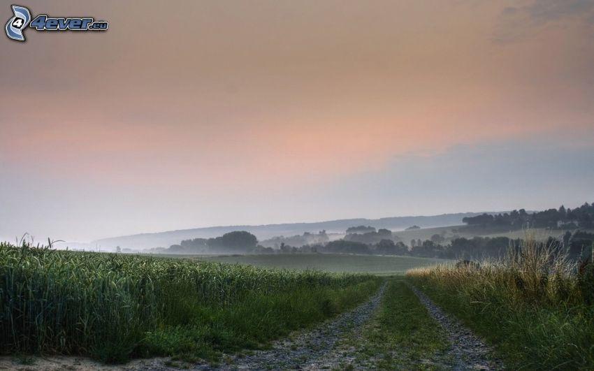 polna droga, pola, lasy i łąki